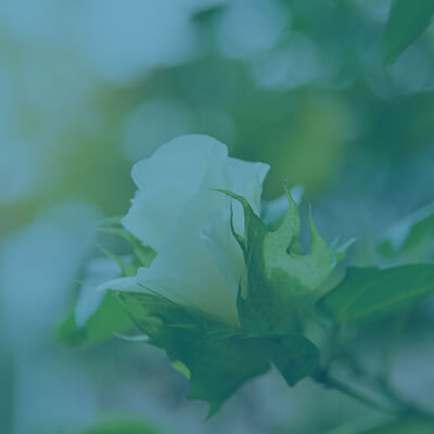 white flower with leaves