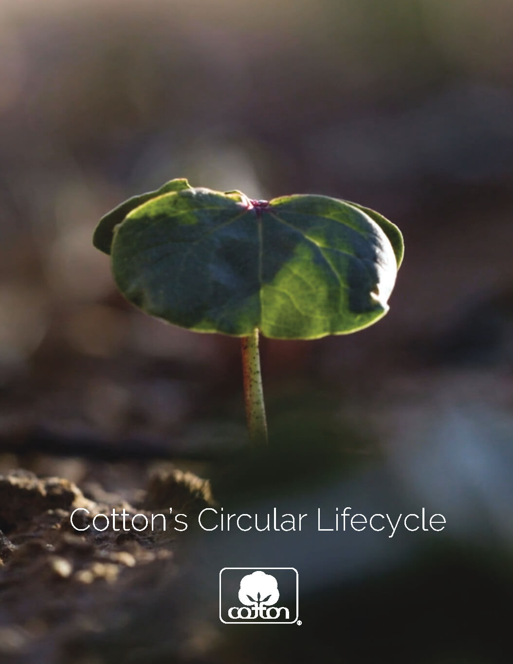 Cotton Circularity Brochure Cover
