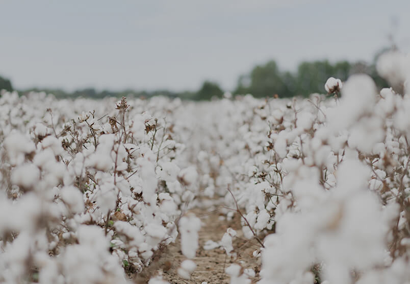 Sustainability, Cotton Circularity
